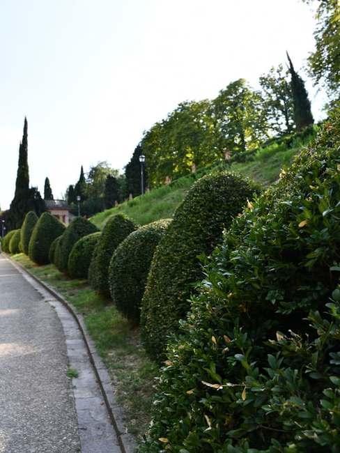 Ścieżka w ogrodzie w stylu francuskim wzdłuż której ciągną się krzewy