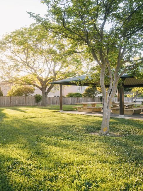 Widok na ogród z zielona trawą