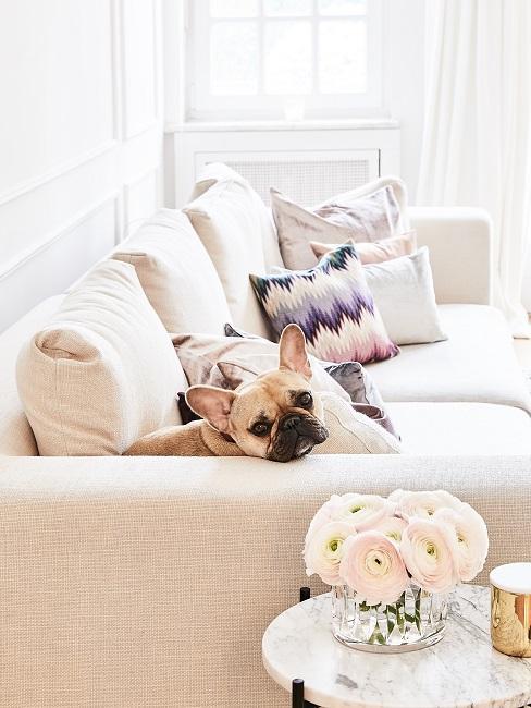 Hund sitzt im Wohnzimmer auf dem Sofa