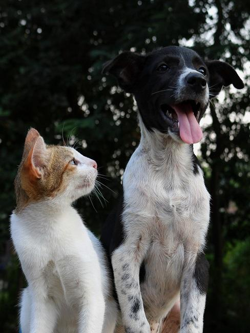 Kot i pies siedzące obok siebie
