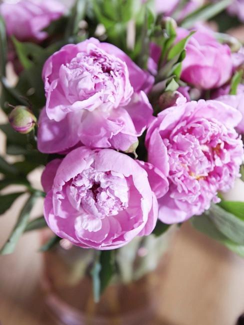 Lila Pfingstrosen in Vase für Frühlingsdeko
