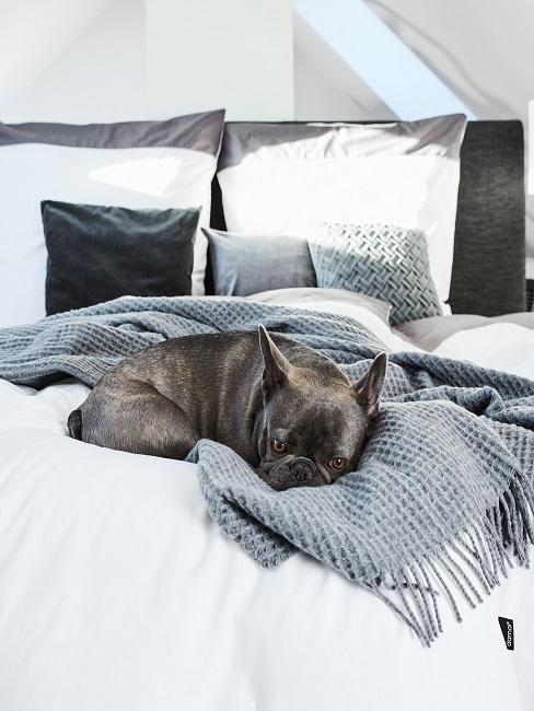 Hund auf einem Bett in grau-weißem modernen Stil
