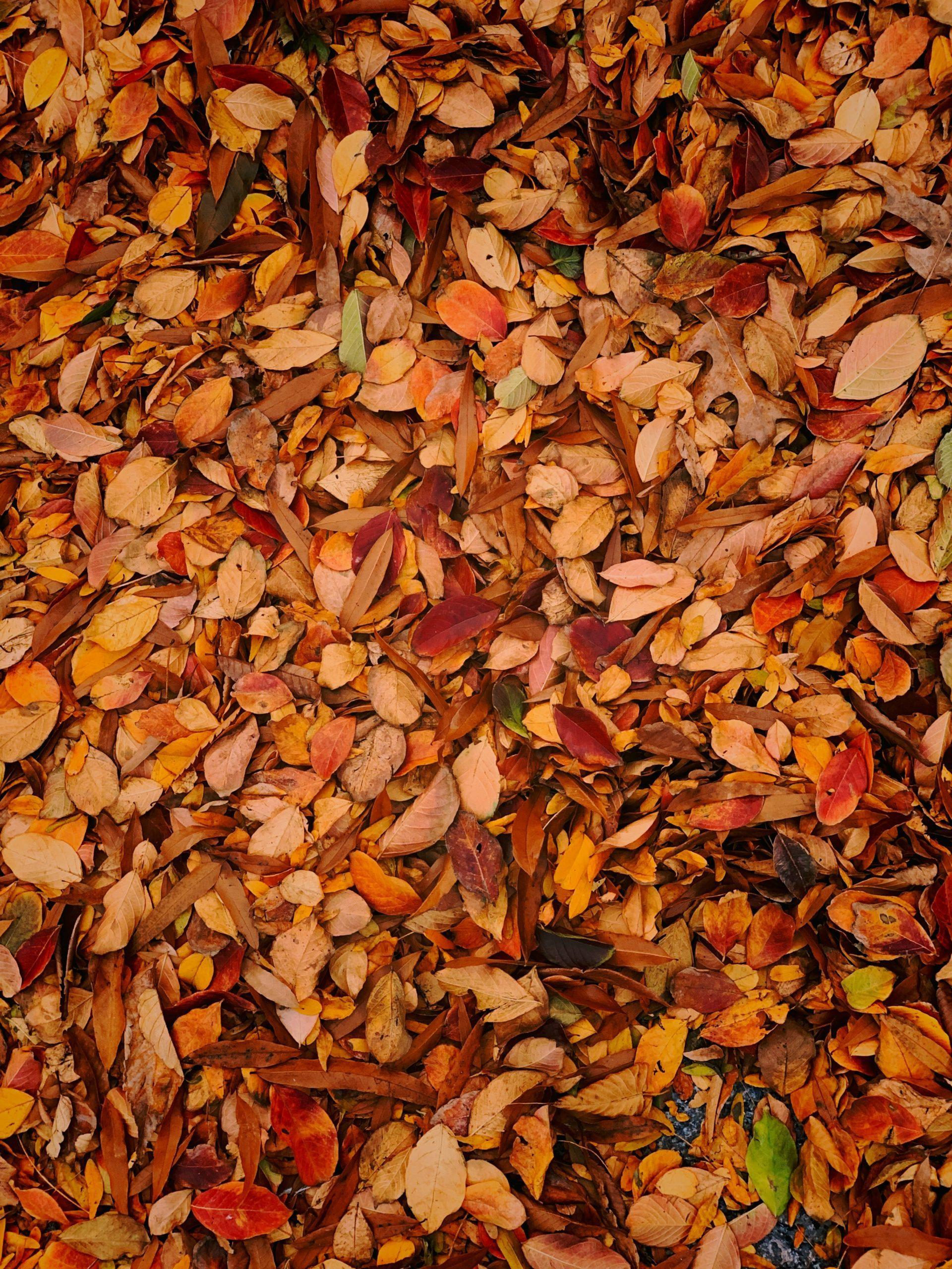 Hojas marrones caídas en el suelo