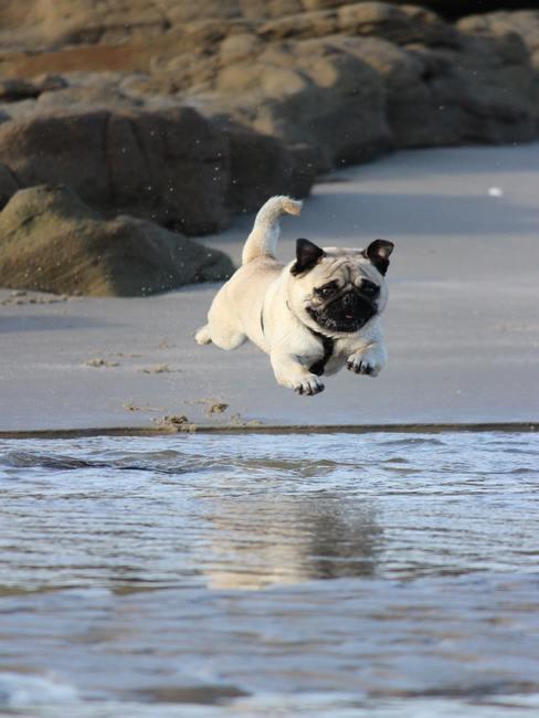 Perro saltando al mar