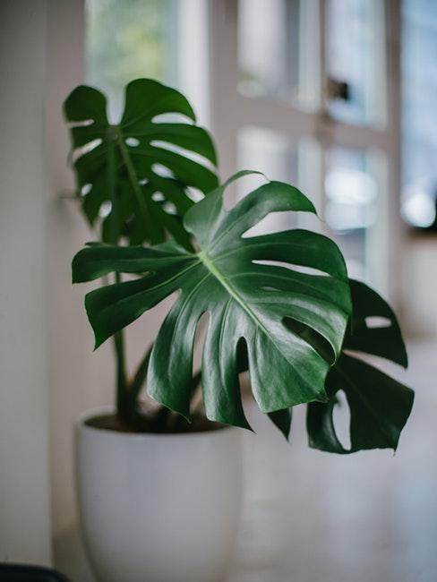 Gros plan d'une plante verte dans un cache-pot blanc