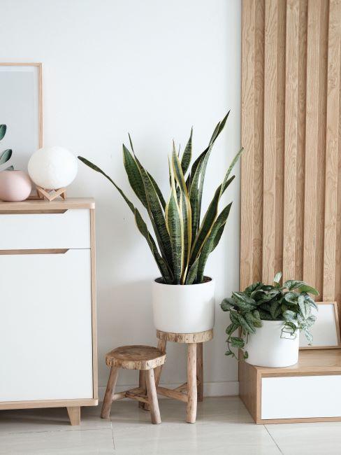 decoration zen claire, tables d appoint en bois brut avec plantes en cache-pots blancs