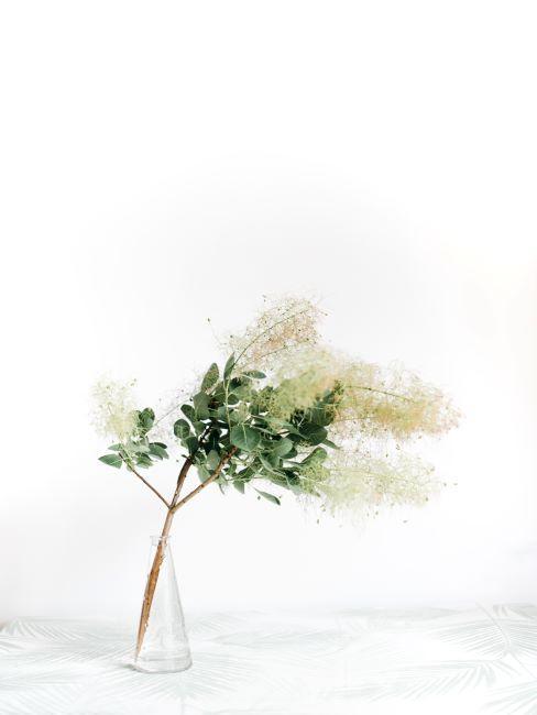 minimalisme, feng shui, plante simple