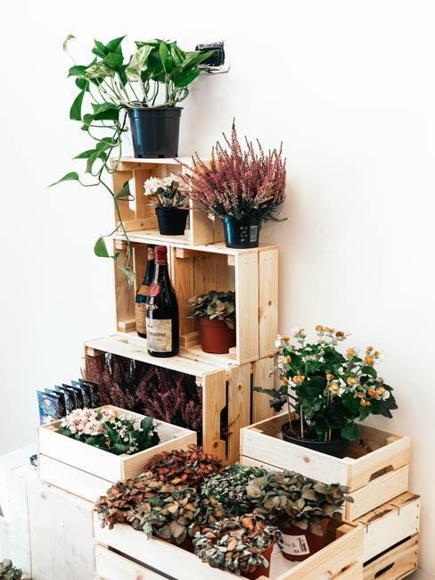 Urban jungle: groene planten in dozen