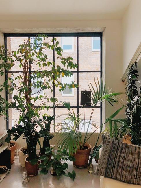 Groot raam met potplanten decoratie in de stijl van de jaren '70
