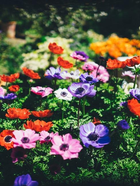 Urban Garden bloementuin met bloemen in primaire kleuren