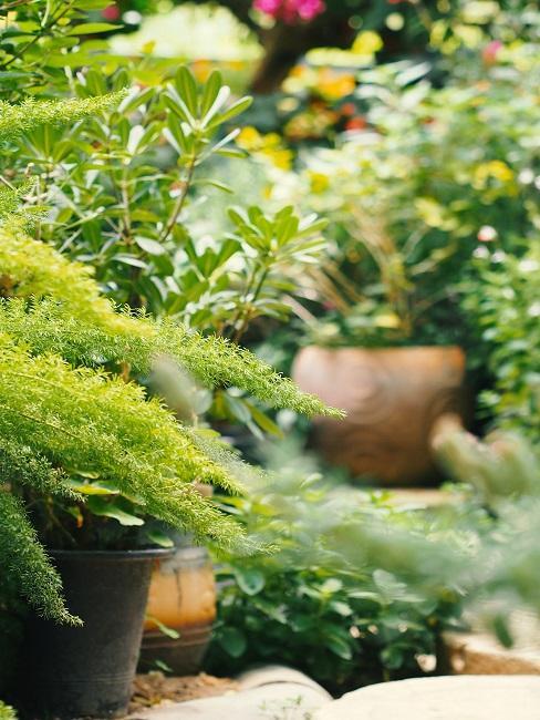 Voortuin planten in potten