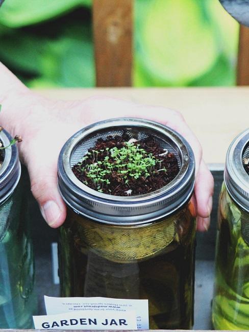 Planten in pot met hand