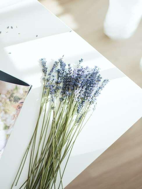 Pęczek suszonej lawendy ułożony na kartce papieru