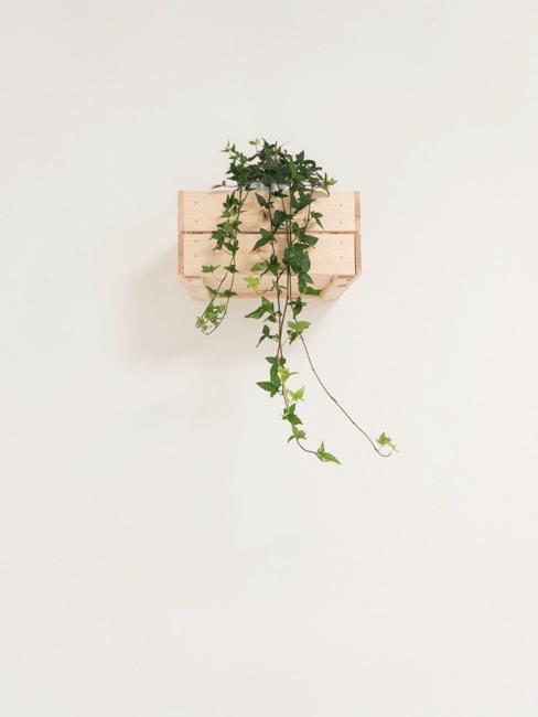 Kleine plank gemaakt van wijnkist als plantenplank