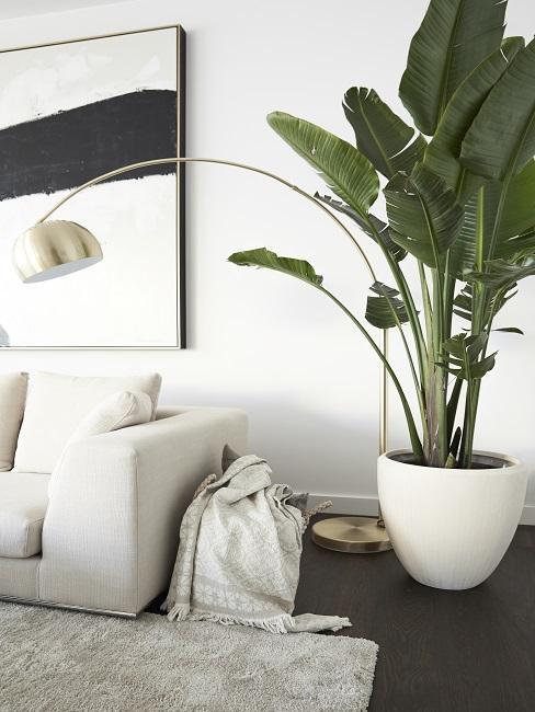 Wohnzimmer Pflanze Banane neben Sofa und Stehlampe