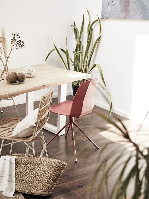Wohnzimmer Pflanze Bogenhanf in Zimmerecke hinter Stuhl und Tisch