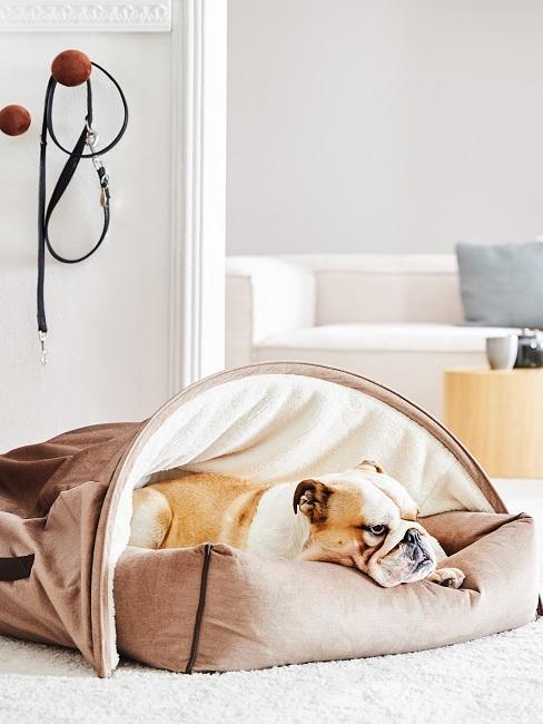 Entspannen Hund auf Kissen