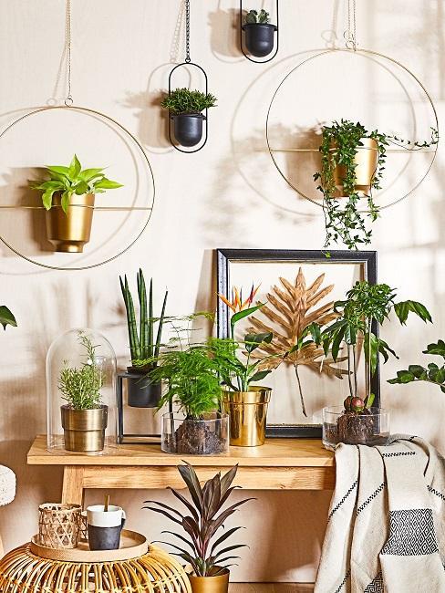 Verschiedene Pflanzen als Wanddeko oder auf einem Tisch