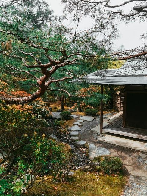Japanischen Garten anlegen Baum neben Haus