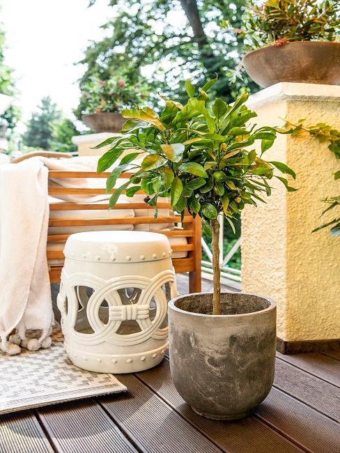 Bankirai Terrasse mit Hocker und Pflanze