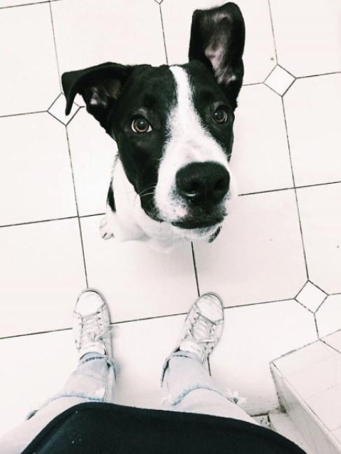 Perro blanco y negro mirando la camara y pies de chico