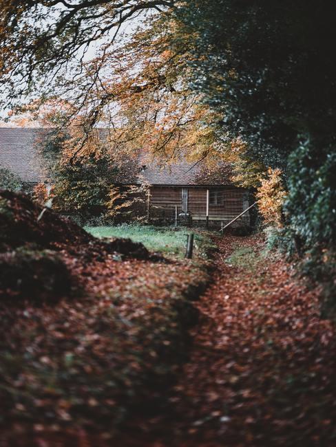Caseta de madera en un jardín frondoso