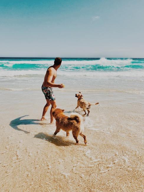 Hombre en bañador jugando en la playa con dos perros