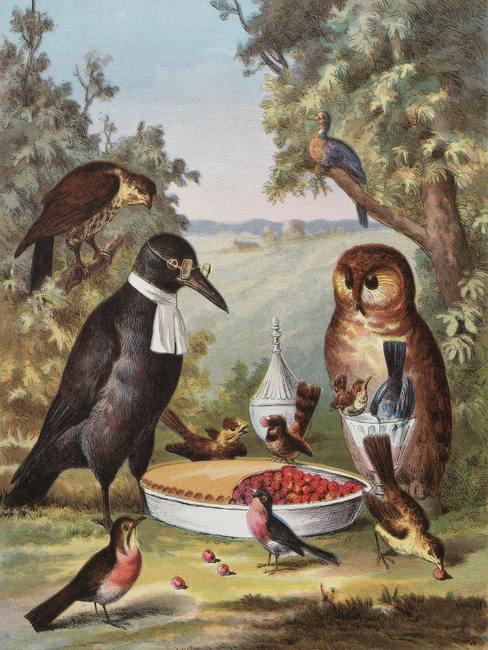 Pájaros alrededor de una tarta de frutas del bosque