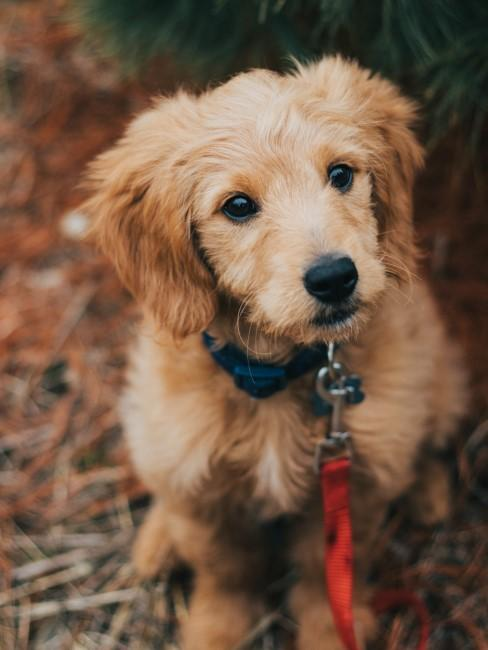 perrito de paseo