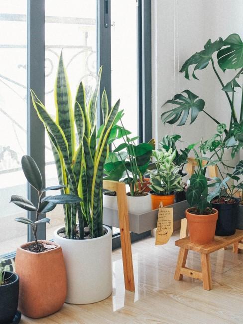 Plantas en una terraza