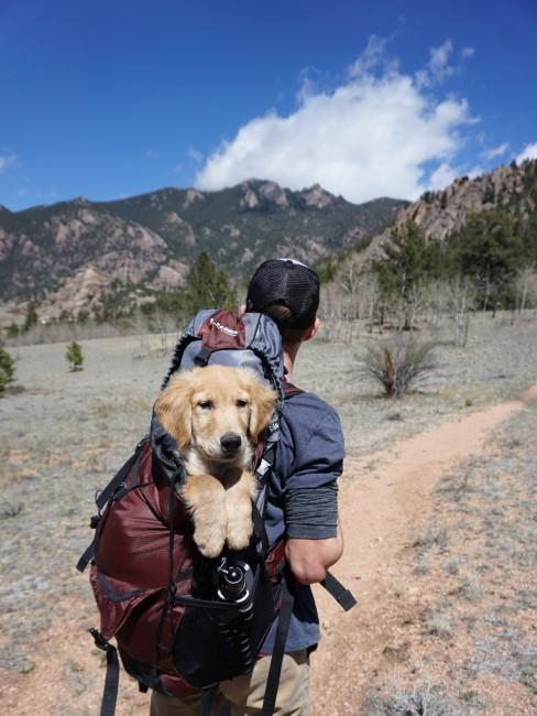 perro en mochila de paseo