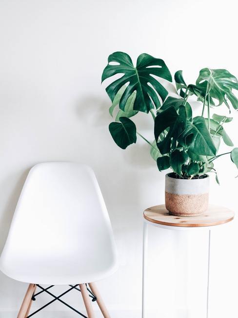 Houten bijzettafel met een Monstera plant in een pot en een witte stoel in Japans design
