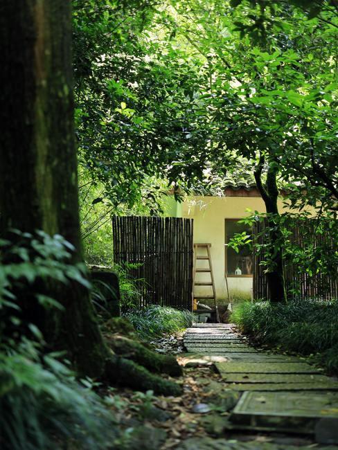 Tuin met veel groene planten en bomen