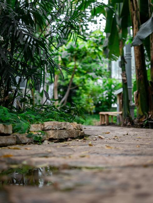 Bloeiende planten in de tuin