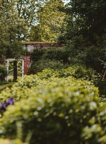 Celgana brama wejściowa do ogrodu oraz krzewy