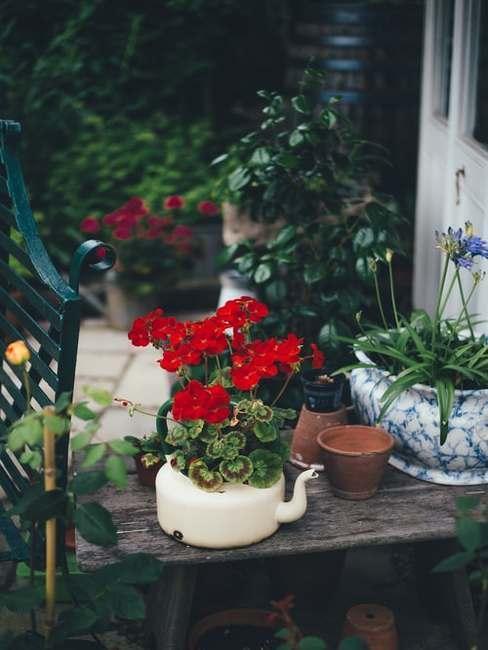 Rośliny posadzone w kreatywnych doniczkach zrobionych z czajnika oraz niebiwskiej wazy w ogrodzie