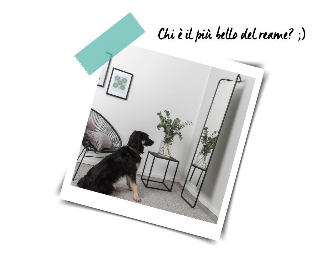 arredare casa con gli specchi cane
