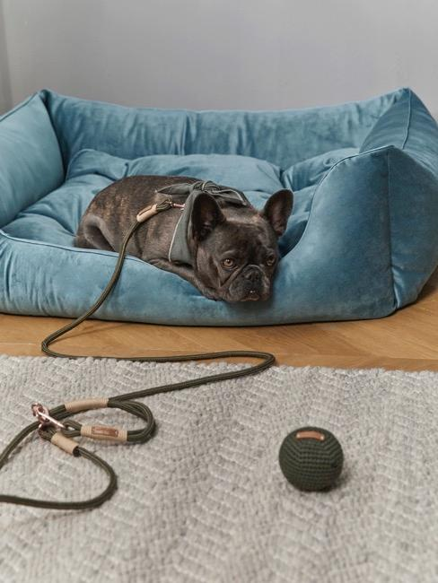 Schwarze franzäsische Bulldogge auf türkisem Samtkissen für Hunde