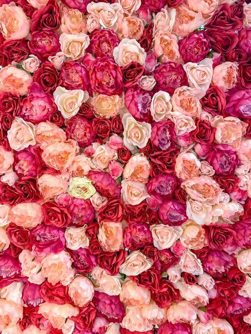 mur de roses au differentes nuances de rouge