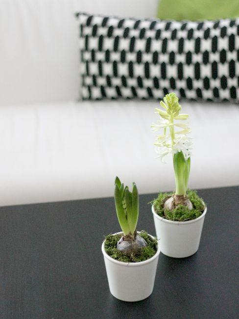 Jarní květiny na stole