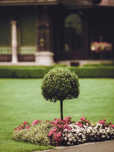 keř v feng shui zahradě