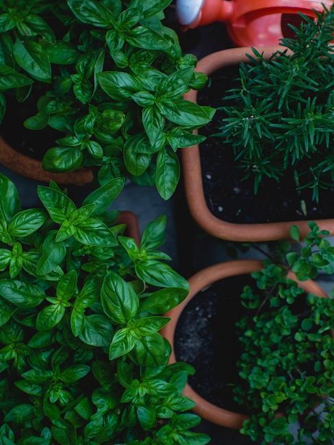 Pěstování-vlastnní-zeleniny