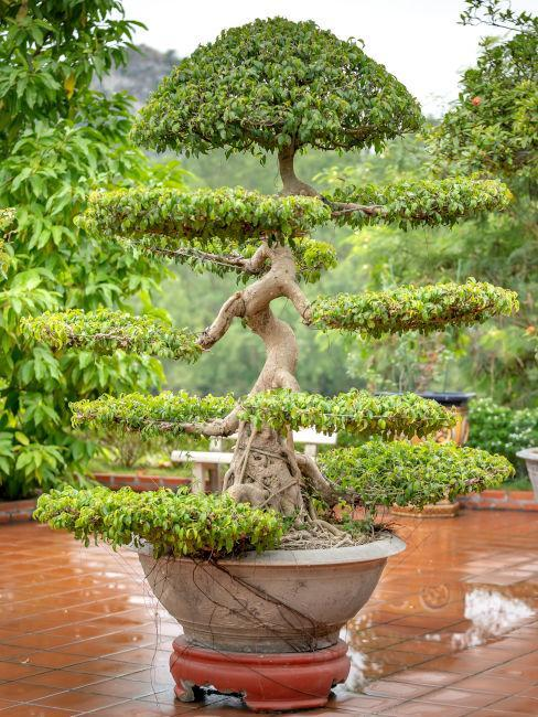 Bonsai Zahrada dle Feng shui