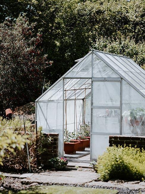 Co pěstovat ve skleníku