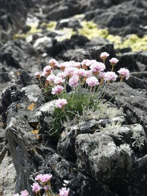 Rostliny u zahradního altánu