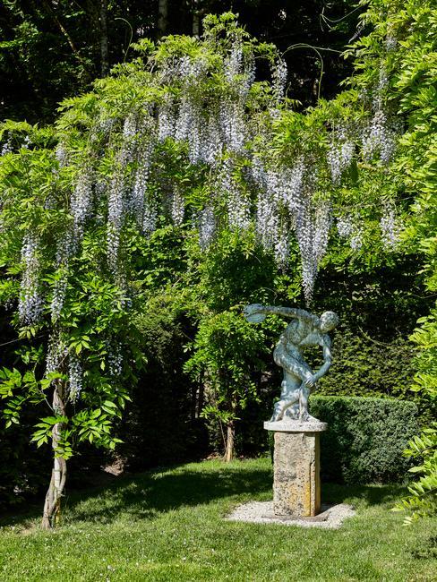 Zahrada s Visterii