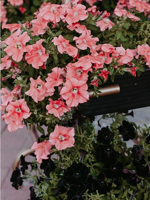 květiny na terasu