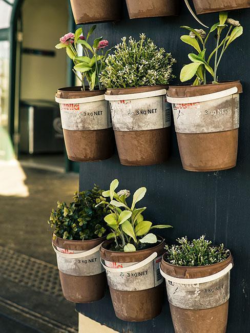 Co pěstovat na balkoně