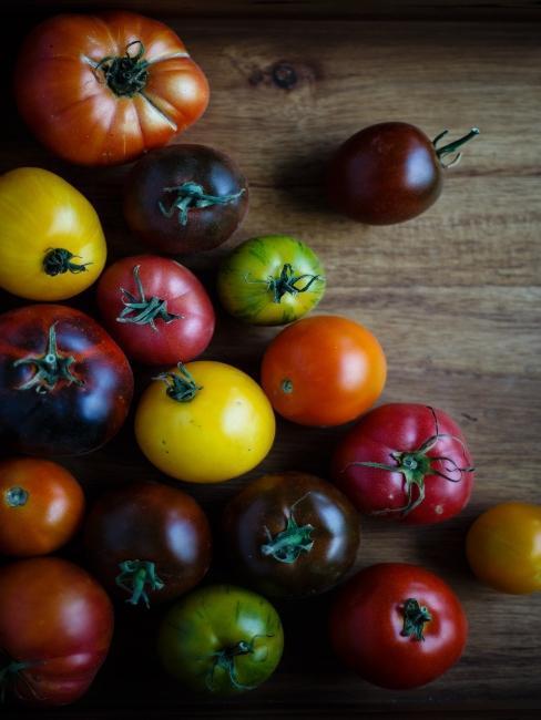 Pěstování-rajčat