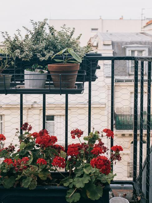 Rostliny-na-balkon-2